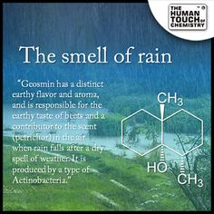 Do you know the #chemistry behind smell of rain ?