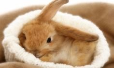 A representative of the almost 6,000 rabbits available for adoption on petfinder.com--BEFORE Easter.  Everyone needs a good home....
