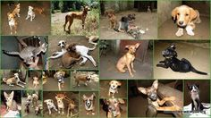 Finally back in beautiful Tanzania I found all our Mbwa Wa Africa dogs and cats happy and well looked after - Thank you Lisa Jens Larissa Amoni and Maiko!  It was amazing to see how much the little (and big!) pups changed and grew in just 3 weeks the progress our paralysed dogs Salza and Taji made and how chubby three legged Mojo got :-)  Check out these stunning pretty and handsome guys!  All of them need a loving home and you are more than welcome to pass by and meet them!  If you want to…