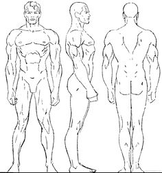 human proportions - Google Search