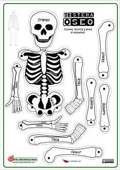 Life-Size Printable Skeleton for Kids Human Body Activities, Science Activities, Activities For Kids, Skeletal System Activities, Science For Kids, Science And Nature, Skeleton Craft, Human Body Unit, Human Human