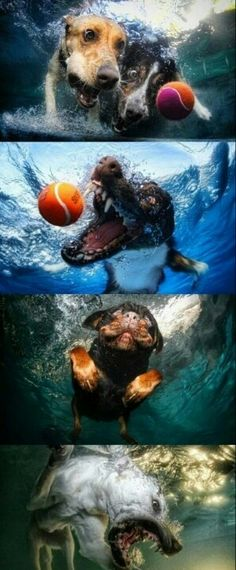 Animals And Pets, Baby Animals, Funny Animals, Cute Animals, Funny Dogs, Cute Dogs, Underwater Dogs, Dogs And Puppies, Doggies