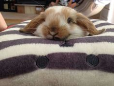 Bunny is happy with his choice of resting spots Animals And Pets, Funny Animals, Cute Animals, Hamsters, Bunny Care, Bunny Bunny, Bunnies, Benny And Joon, Cute Bunny Pictures