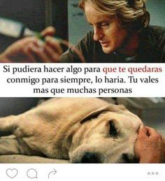 marley y yo Sad Movies, Great Movies, Saddest Movies, Tv Quotes, Movie Quotes, Qoutes, I Love Dogs, Puppy Love, Amor Animal