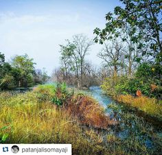 #Repost @patanjalisomayaji with @repostapp To get featured tag your post with #Talestreet Backwaters flooding into the forest at Paoni (Umred-Karhandla). #india #indiaclicks #indiapictures #incredibleindiaofficial #indiagram #indianstories #indiantravelfeatures #puneclickarts #puneinstagrammers #natgeo #photooftheday #picoftheday #canon #InspiredTraveller #nature #beautiful #pretty #tree #beauty #light #mothernature #twitter #talestreet