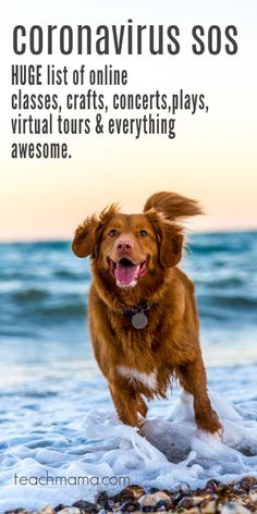 Dog training can make your dog happier. Here's 9 easy dog obedience training tips to help you have a dog that listens and obeys. I Love Dogs, Puppy Love, Cute Dogs, Dog Quotes Love, Pet Quotes, Animal Quotes, Animal Pics, Goldendoodle, Virtual Tour