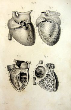 Antique ANATOMY print 1846 human anatomy by LyraNebulaPrints, $24.50