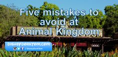 """I've come to believe that Animal Kingdom is one of those parks that's a little misunderstood at Walt Disney World. Often labeled as a """"half day park"""", mostly due to it's typically earlier closing t..."""