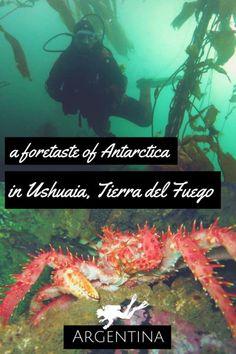 A foretaste of Antartica in Ushuaia, Argentina – Scuba Diving in Argentina – World Adventure Divers – Read more on https://worldadventuredivers.com/2013/09/30/extreme-diving-a-foretaste-of-antartica-in-ushuaia-argentina/