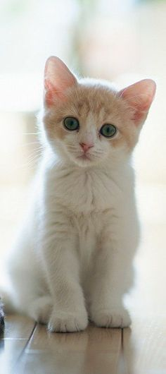 Adorable little cute kitty looking so cute...