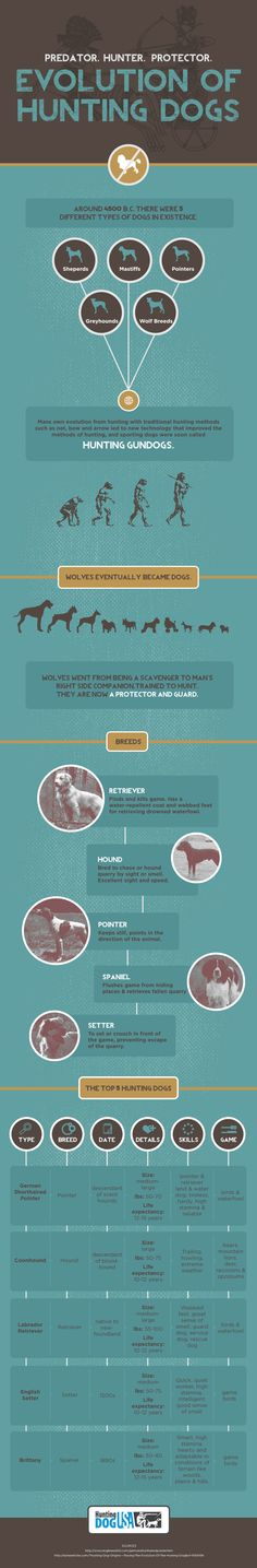 full-hunting-dogs #infographic