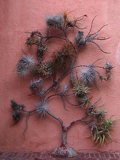 Tillandsia tree by Polylepis, via Flickr