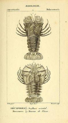 Considérations générales sur la classe des crustacésby BioDivLibrary Paris: F.G. Levrault,1825