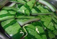 Pudim de Leite Ninho com 4 Ingredientes - Veja a Receita: Remove Sweat Stains, Aspirin, Celery, Green Beans, Cucumber, Baking Soda, The Cure, Vegetables, Health