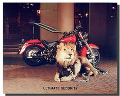 Add this amazing Harley Davidson with ultimate security motorcycle art print poster at your home which is sure to add a charming ambience into your place. It will be a great addition and goes well with boys room. We offer high quality gloss finish paper with archival quality inks which ensures long lasting beauty of the product. Make your order today!