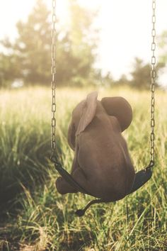 Let your imagination swing 😆 Cute baby elephant 🐘 Photo edited by via Elephants Photos, Save The Elephants, Elephants Playing, Cute Baby Elephant, Elephant Art, Elephant Quotes, Elephant Stuff, Funny Elephant, Baby Giraffes