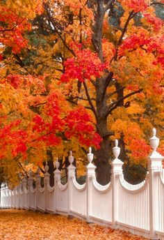 A pretty white fence surrounded by colorful Fall foliage in Bennington, Vermont. Le Vermont, Bennington Vermont, Beautiful Places, Beautiful Pictures, Stunningly Beautiful, Autumn Scenes, White Fence, Green Fence, Fence Landscaping