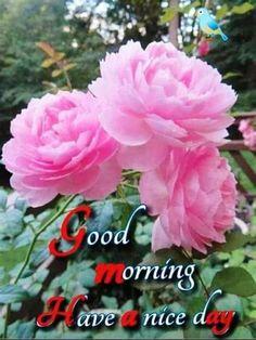 Good Morning Apps, Good Morning Love Gif, Latest Good Morning Images, Good Morning Beautiful Flowers, Good Morning Roses, Good Morning Images Flowers, Good Morning Image Quotes, Good Morning Beautiful Quotes, Good Morning Photos
