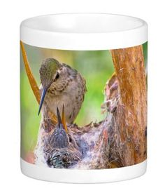 Mother Hummingbird and Baby Coffee Mug #msqrd2 Photo Credit: Michael Moriarty Photography Available here: http://www.zazzle.com/mother_and_baby_coffee_mug-168691198745295610