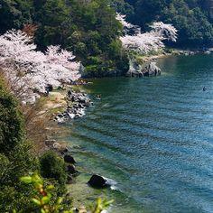 【photo_nana3】さんのInstagramをピンしています。 《. Lake BIWA . . #滋賀 #海津大崎  #マキノ町  #海みたい #琵琶湖 #湖 #桜  #写真好きな人と繋がりたい  #ファインダー越しの私の世界  #canon70d #canoneos70d  #canonphotography #photography  #ig_japan #phos_japan #canon  #カメラ女子 #一眼レフ #ドライブ . . . 学祭最終日です。 すごく眠いです。》