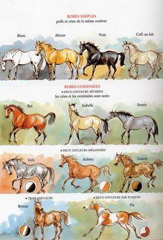 Les différentes robes des chevaux : alezan,pie, bai, rouan, louvet, etc.