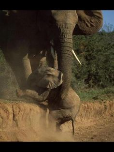 Elephant baby rescue