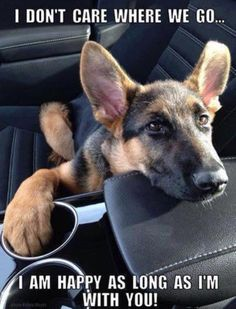 Germanshepherdog