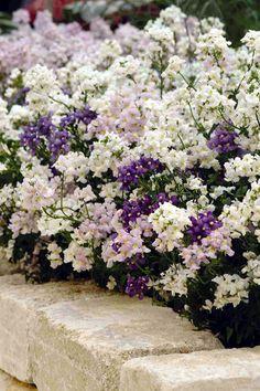 indoor mini garden design - Internal Home Design Love Garden, Dream Garden, Lawn And Garden, Garden Shrubs, Landscaping Plants, Garden Plants, Begonia, Nemesia Flowers, Beautiful Gardens