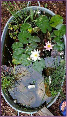Water Garden Plants, Container Water Gardens, Indoor Water Garden, Indoor Water Fountains, Outdoor Fountains, Ponds Backyard, Backyard Landscaping, Landscaping Ideas, Backyard Ideas