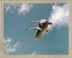 alan m hunt Bird Paintings, Photorealism, Wildlife Art, Bird Prints, Bird Art, Natural World, Nature, Animals, Beautiful