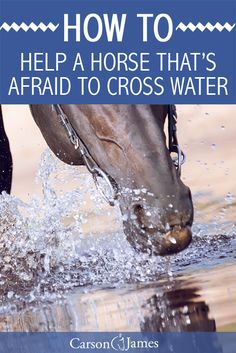 Many horses are afraid to cross foreign objects like puddles and creeks. Here's a few horse training tips you can do to help them overcome this fear.