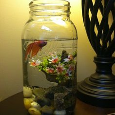 Love my mason jar fish bowl, in a gallon jar so the fish has room