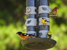 Bird Feeders - Bob Vila Radio - Bob's Blogs
