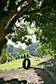 this typifies, for me, the country.....trees, green grass and a tyre swing.....bliss...