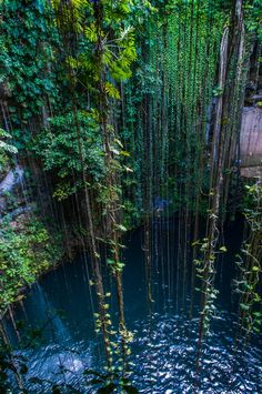 I can't believe there's really a place with a water hole where from above you can be tarzan and swing into a dive!!  :)