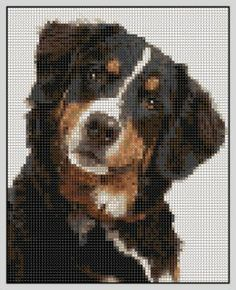 bernesemountaindogcrosstitch | Free Bernese Mountain Dog Cross Stitch Pattern