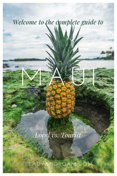 Want to travel to Maui, Hawaii with your family? Check out out contributors tips on where to eat, shop, and explore on your Maui getaway. Maui Travel, Hawaii Vacation, Maui Hawaii, Oahu, Pineapple Health Benefits, Coconut Health Benefits, Especie Animal, Matcha Benefits, Avocado Benefits