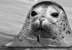 Das Jahr der Tiere - CALVENDO Kalender - http://www.calvendo.de/galerie/das-jahr-der-tiere/ - #schwarzweiss #blackandwhite #kalender #calvendo #tiere #animals