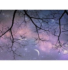 Hey, I found this really awesome Etsy listing at https://www.etsy.com/listing/88332990/starry-night-photo-tree-photo-twinkle
