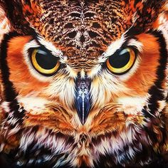 "thelordismylightandmysalvation: "" Barn Owl (Umm, no.this is a Great Horned Owl. Owl Bird, Bird Art, Pet Birds, Owl Photos, Owl Pictures, Beautiful Owl, Animals Beautiful, Hai Tattoos, Model Tattoo"