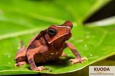 best travel to peruvian jungle, www.kuodatravel.com