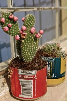love these old tins with the cactus!~