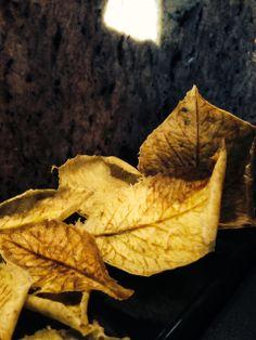 foglie edibili