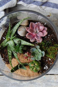 How to build a beautiful DIY terrarium and keep it alive all year long
