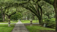 https://flic.kr/p/CH5P9H | Brookgreen Gardens - Shahed pedestrian alley | Images taken by hoan luong is licensed under a Creative Commons Attribution-NonCommercial-NoDerivs 3.0 Unported License.
