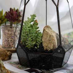 400g Black Natural Polished Pebbles 0.5cm  1cm length image 8 Terrarium Containers, Terrarium Ideas, Planter Ideas, Glass Terrarium, Succulent Terrarium, Terrariums, Natural Materials, Natural Wood, Natural Stones