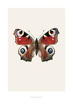 Poster butterfly S8 42x59 - Hagedornhagen - BijzonderMOOI* Dutch design online