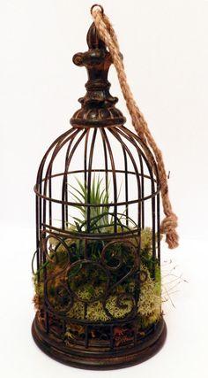 birdcage with tillandsia