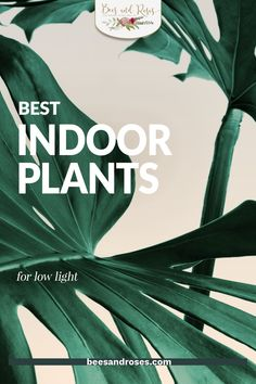 Have a dark corner of your home that you are looking to brighten up with a houseplant? Pick one of the houseplants on this list! There are several varieties of plants that love low light, all you have to do is choose your favorite. #beesandrosesblog #airpurifyingplants #houseplants Best Indoor Plants, Outdoor Plants, Container Gardening, Gardening Tips, Easy Plants To Grow, Low Light Plants, Plant Guide, Bedroom Plants, Potting Soil