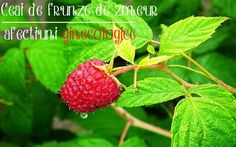 Free Image on Pixabay - Fruit, Malina, Fruit Garden Free Pictures, Free Photos, Free Images, Raspberry, Strawberry, Fruit Garden, Natural Remedies, Food, Plant